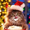 Cute Christmas Cat eCard
