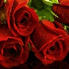 Beautiful Roses For A Beautiful Heart eCard