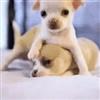 Puppies eCard