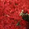 I Chose This Rose For You eCard