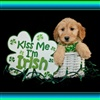 Kiss Me Im Irish eCard