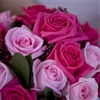 Graceful Roses For You Coz You Are Special