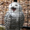 You're A Real Hoot!