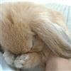 bunnie miss you