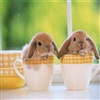 Happy Easter Friend