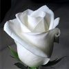 for you friend