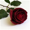 Sending you this rose