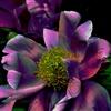 FLOWER eCard