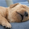 time to sleep zzzz