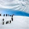 penguin joke