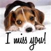 miss you cutie